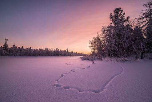 Обои Следы на заснеженном поле среди лесов на фоне утреннего неба