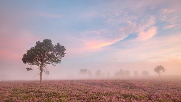 Обои Туманная дымка над цветочной поляной на фоне одиноких деревьев