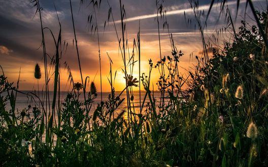 Обои Вид на солнце на небе сквозь траву с полевыми цветами, фотограф Jose Oliveira