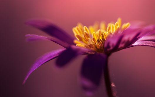 Обои Сиреневый цветок крупным планом