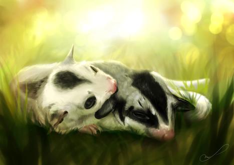 Обои Две маленьких летяги спят в траве, by Martith