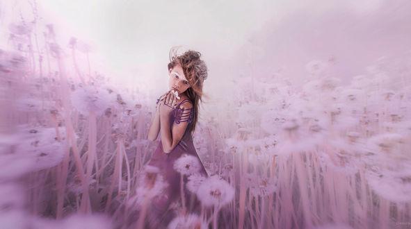 Обои Девочка на сиреневом поле с одуванчиками, фотограф Алексей Макаренок