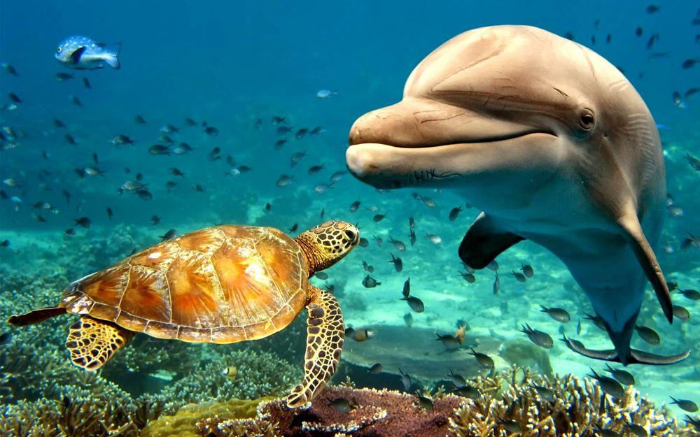Обои для рабочего стола Улыбающийся дельфин и черепаха в подводном мире среди рыб