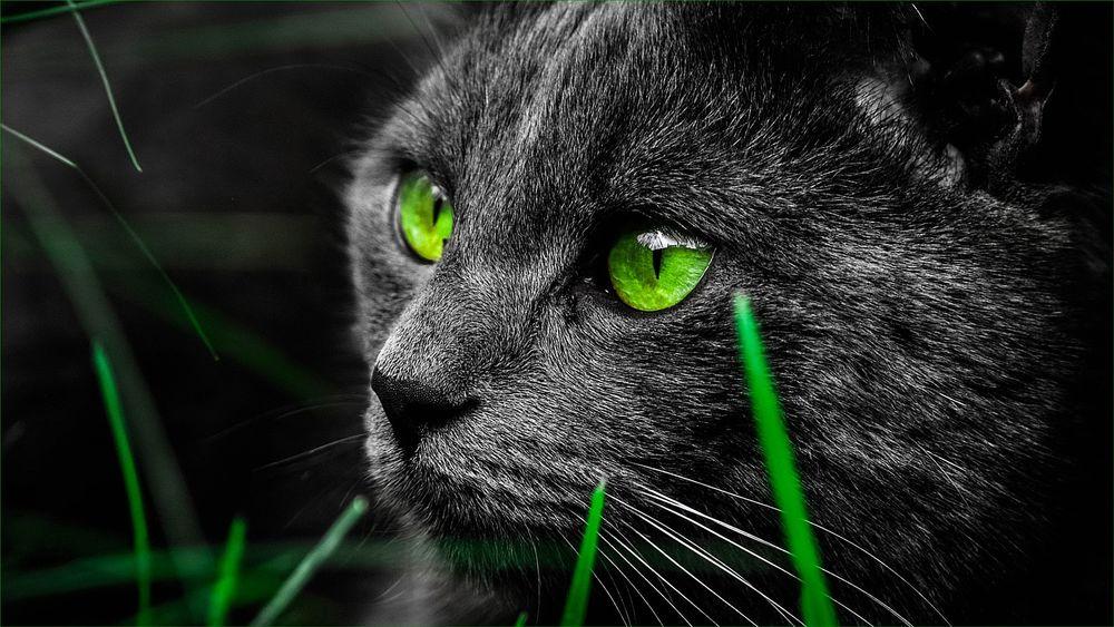 Картинки черные кошки с зелеными глазами