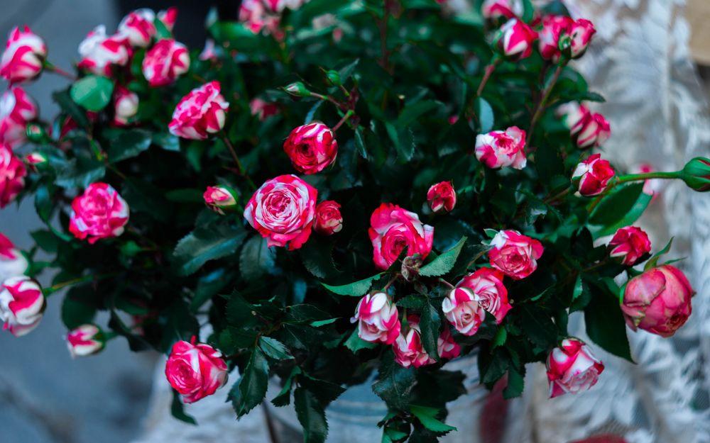 Обои для рабочего стола Ведро с большим букетом бело-розовых роз