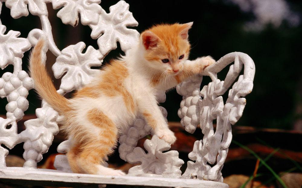 Обои для рабочего стола Бело-рыжий котенок на красивой узорчатой скамейке