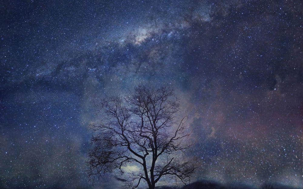 Обои для рабочего стола Одинокое дерево на фоне звездного неба