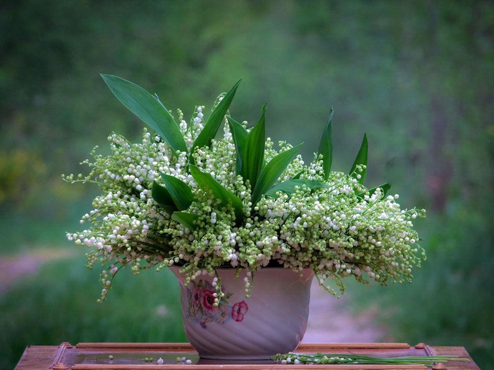 Обои для рабочего стола Букет ландышей в белом цветочном горшке на зеленом фоне, фотограф Вячеслав Мищенко