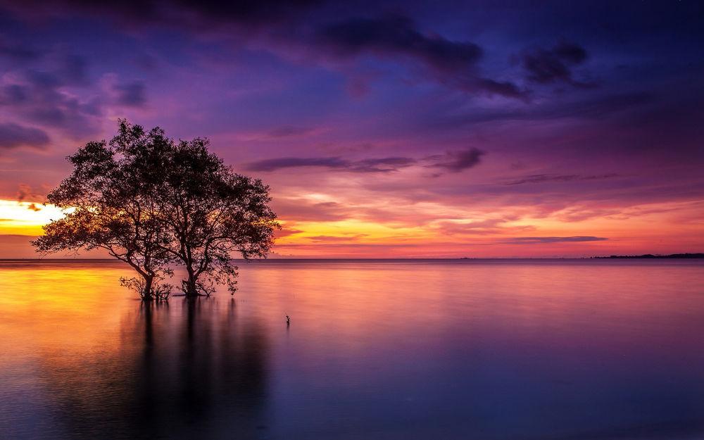 Обои для рабочего стола Два одиноких дерева торчат из морской глади на закате