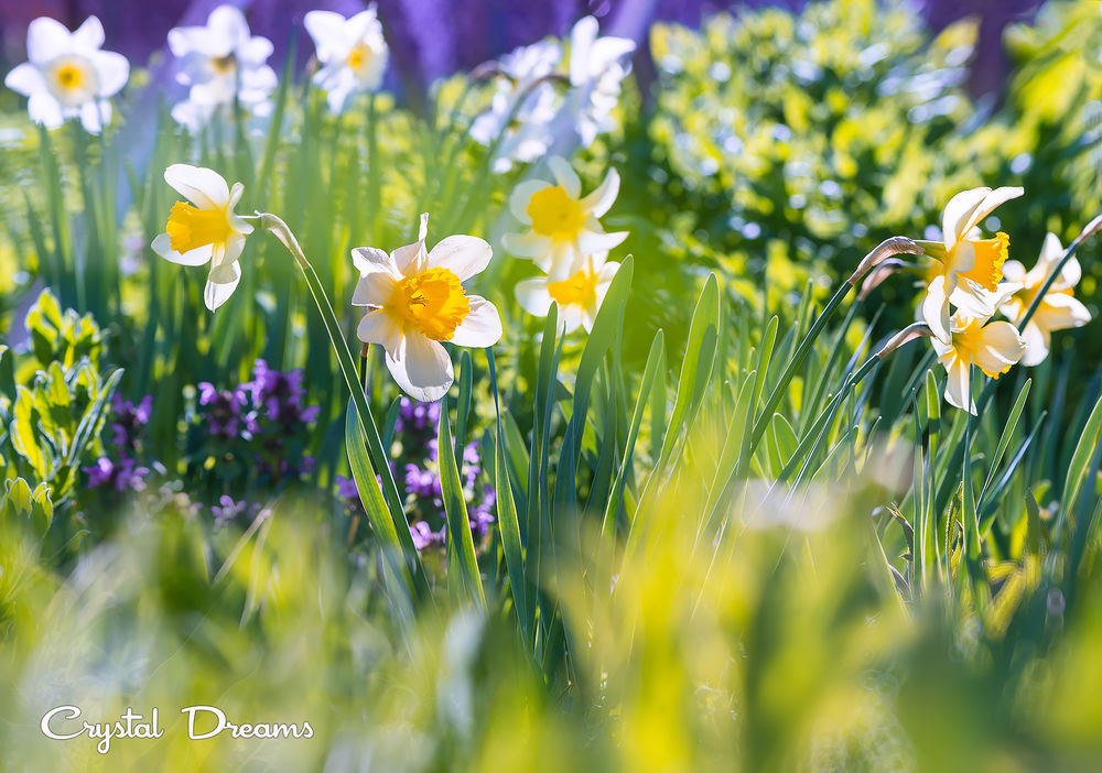 картинки солнечные весенние