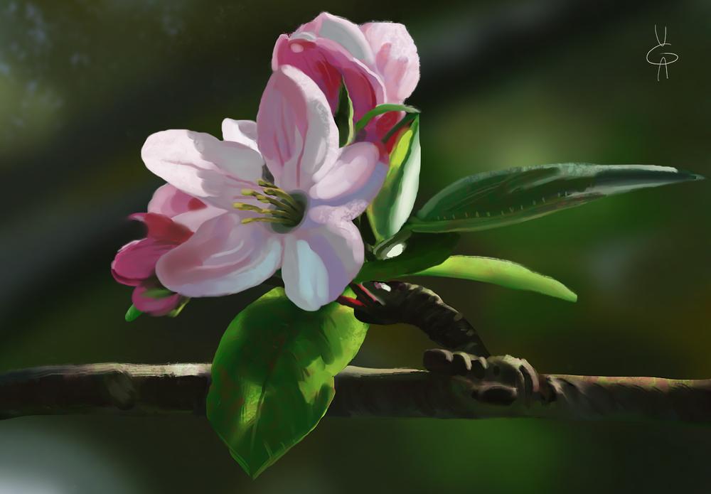 Обои для рабочего стола Веточка цветущей яблони, by Vera00Eikon