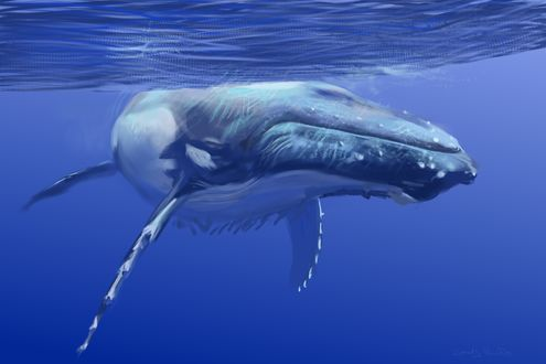 Обои Синий кит под водой, by speedy-painter
