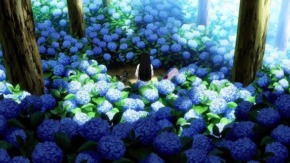 Обои Sankarea / Санка Рэа сидит среди цветов гортензий, аниме Санкарея / Sankarea