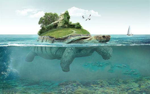 Обои Черепаха, плывущая в море, на спине которой островок с домиком и деревьями, на фоне неба, чаек и яхты на горизонте