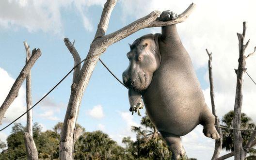 Обои Мультяшный бегемот, с помощью веревки, перебирающийся с ветки на ветку