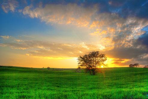 Обои Солнечный закат на цветном небе за одиноким деревом в поле
