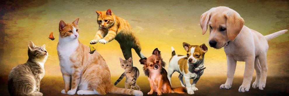 Обои Собрание котят и щенков, ловящих бабочек, by Gellinger