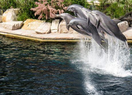Обои Дельфины в прыжке в брызгах пены, на фоне камней и деревьев