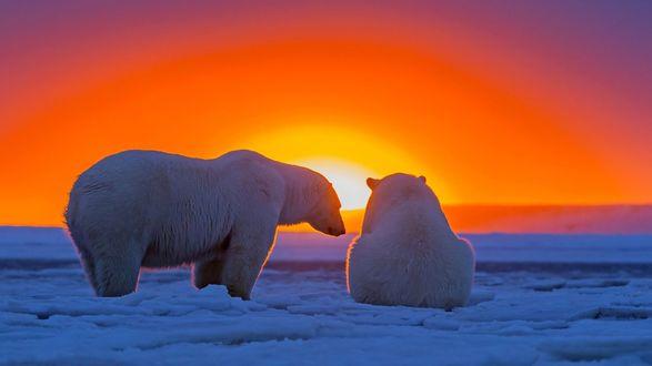 Обои Белые медведи во льдах на фоне солнце