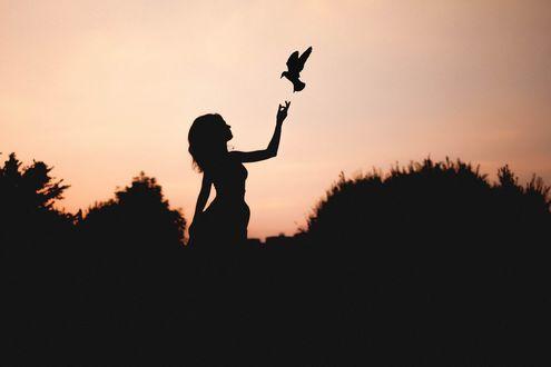Обои Силуэт девушки, протянувшей руку к парящей птице на фоне природы