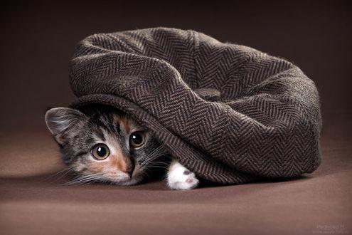 Обои Котенок прячется под шляпкой, фотограф Надежда Иванова