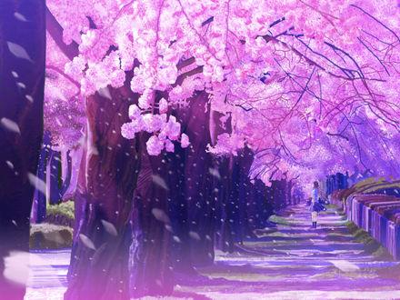 Обои Девочка стоит на аллее с весенними цветущими деревьями, Аниме:5 сантиметров в секунду