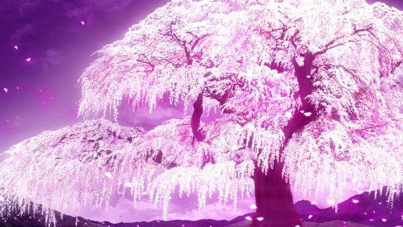 Обои Весеннее цветущее дерево, аниме:5 сантиметров в секунду