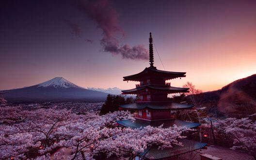 Обои Пагода храм Сэнсо-дзи / Senso-ji среди цветущей сакуры недалеко от вулкана Фудзияма, Япония / Japan