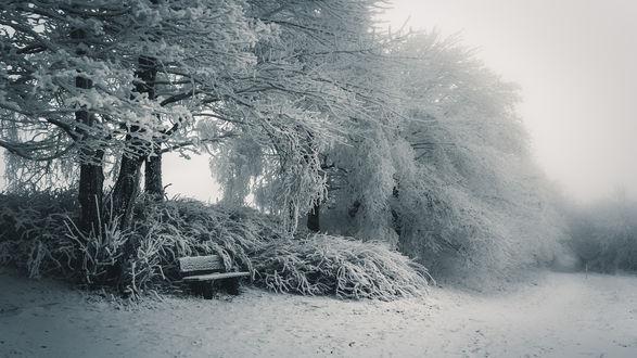 Обои Скамейка под укрытыми инеем деревьями