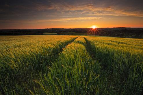 Обои Закат солнца над зеленым полем, фотограф Simon Gakhar