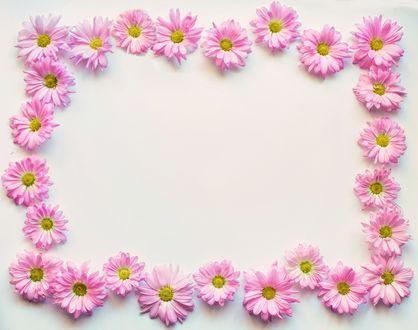 Обои Рамка их розовых цветков маргариток