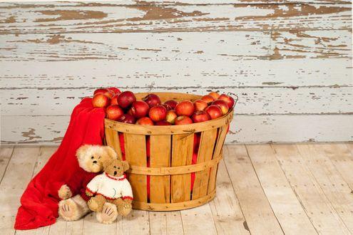 Обои Два плюшевых медвежонка прислоненные к корзине с яблоками