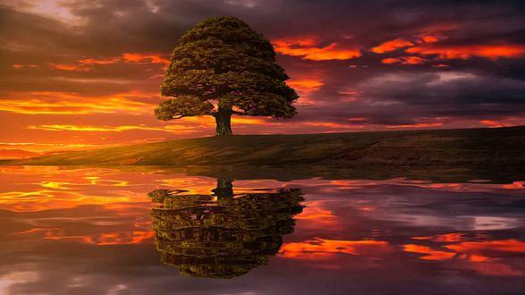 Обои Дерево и его отражение в воде, фотограф geken