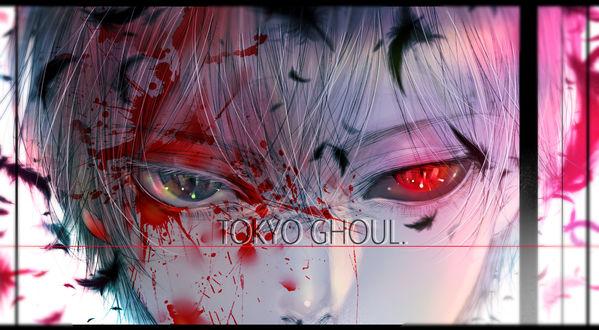 Обои Ken Kaneki / Кен Канеки из аниме Tokyo Ghoul / Токийский Гуль, by kuroe