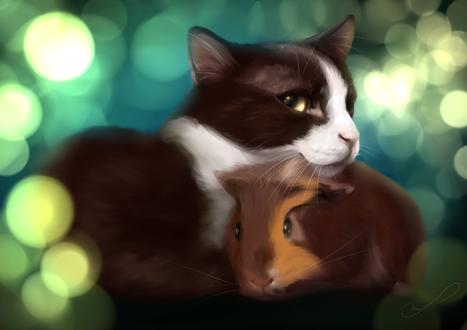 Обои Черно-белый кот с рыжей морской свинкой, by Martith