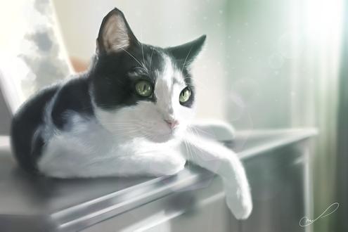 Обои Бело-черная кошка с зелеными глазами лежит на камоде, by Martith