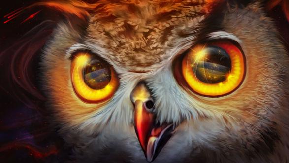 Обои Сова с янтарными глазами крупным планом, by Exobiology