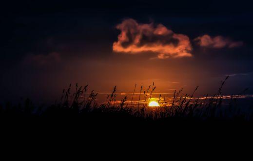 Обои Колоски на фоне закатного неба, фотограф Dirk Frielinghaus