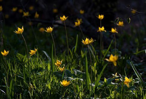 Обои Весенние желтые мелкие цветы