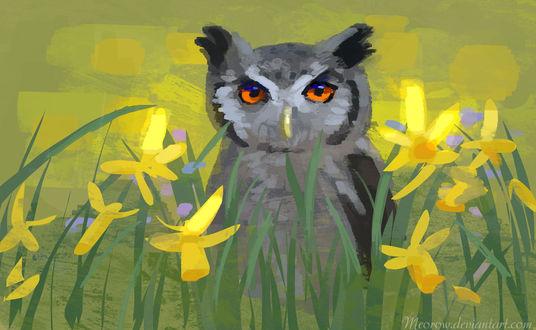 Обои Сова с янтарными глазами в желтых цветах нарцисса, by Meorow