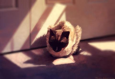 Обои Сиамская кошка спит на полу, by Meorow