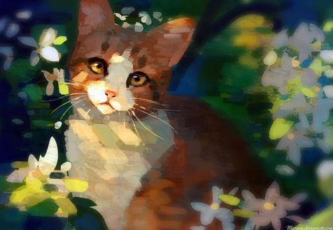 Обои Рыже-белый котенок на фоне цветов, by Meorow