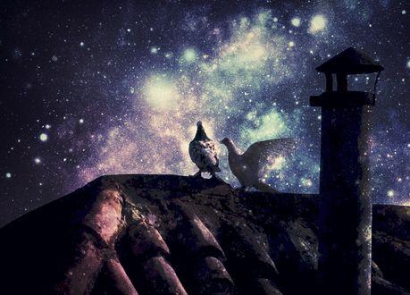 Обои Голуби сидят на крыше дома на фоне ночного неба