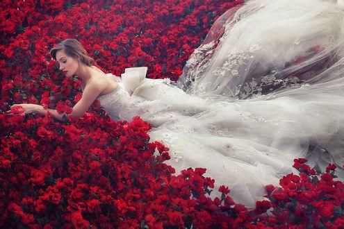 Обои Девушка в свадебном плат среди красных цветов, by robinpika