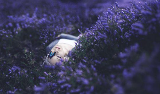 Обои Девушка лежит на цветочном поле, на ее лице сидит бабочка махаон