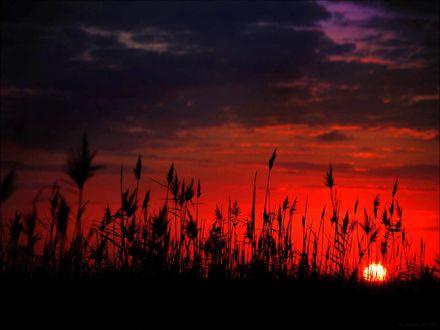 Обои Травинки на фоне багряного заката солнца, by gilad