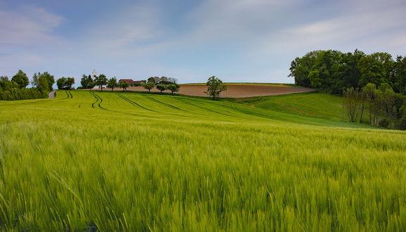 Обои Зеленое поле под голубым небом, фотограф Игорь Дубровский