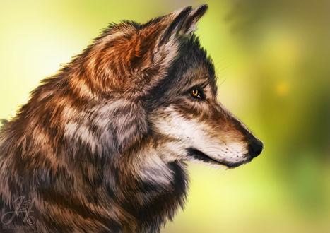 Обои Портрет серого волка в профиль на размытом фоне, by Arkarti