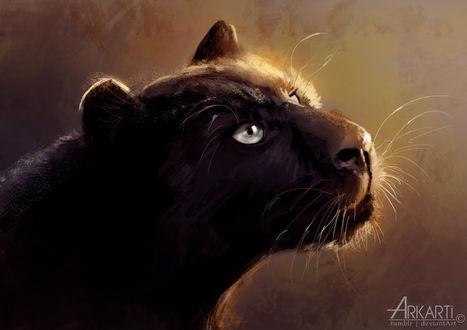 Обои Черная пантера в профиль, by Arkarti