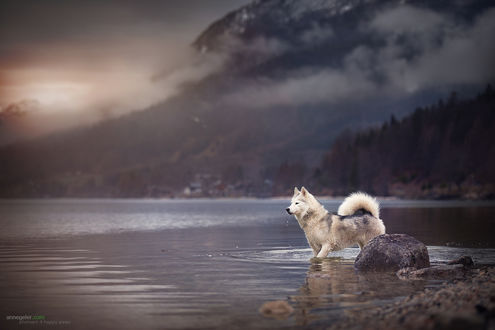 Обои Собака стоит в воде на фоне горного пейзажа, by Anne Geier